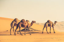 I Lead You Follow by Ahmed Rashed