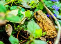 Hiding Out by Jon Woodhams