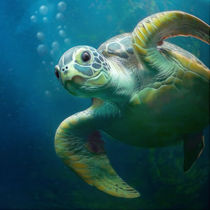 bubbles the cute sea turtle by photoplace