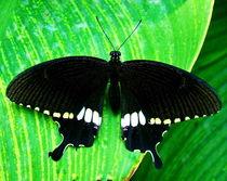 Moth by Irfan Gillani