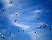 Freedom by Irfan Gillani