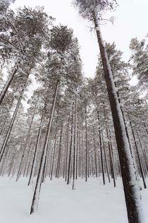Schwedischer Winterwald von Thomas Rathay