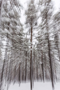 Schwedischer Winterwald by Thomas Rathay