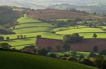 Mid Devon fields von Pete Hemington