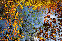 Autumn Leaves by Steve Ball