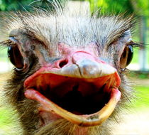My Laughing Baby  by Irfan Gillani