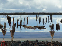 Dried Cod - Iceland by Jörg Sobottka