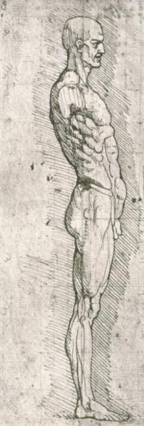 Anatomische Studie von Leonardo Da Vinci