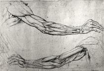 Studie von Armen von Leonardo Da Vinci