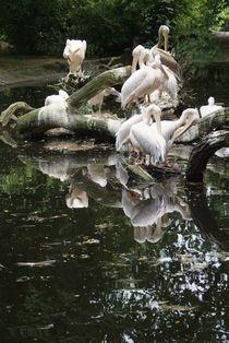 Water Birds von uta-behnfeld