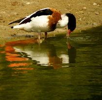 Bird Reflex von uta-behnfeld