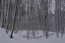 Winterwunderland von m-i-ma