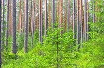 Wald I von m-i-ma