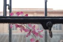 Fenster mit Blume von m-i-ma