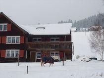 Pferd im Schnee von m-i-ma