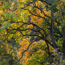 Autumn 05 by Tom Uhlenberg