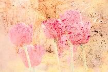 Tulpen by © Ivonne Wentzler