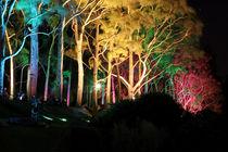 Kings Park at night - Perth - Western Australia by Jörg Sobottka