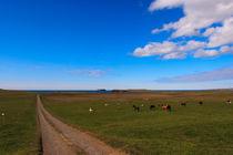 Iceland horses - Islandpferde - Island von Jörg Sobottka