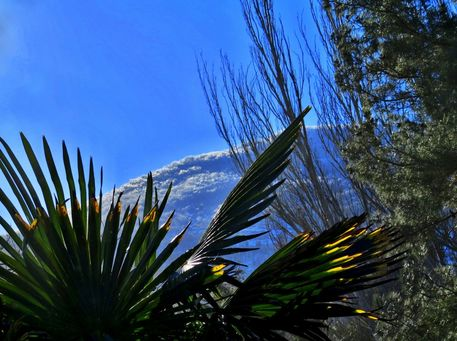 Img-2098-ayu-dag-and-palm-snow-feb-1st-001-mountains-and-palms