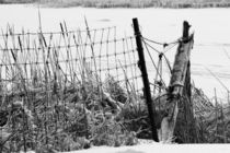 Ice Coated Wire Fence and Rushes von Louise Heusinkveld