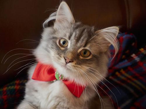 Christmas-kitten0109