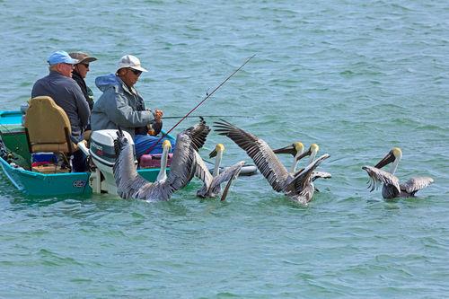 Fishing0358