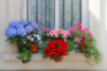 Flowers on a windowsill in Paris, France by Louise Heusinkveld