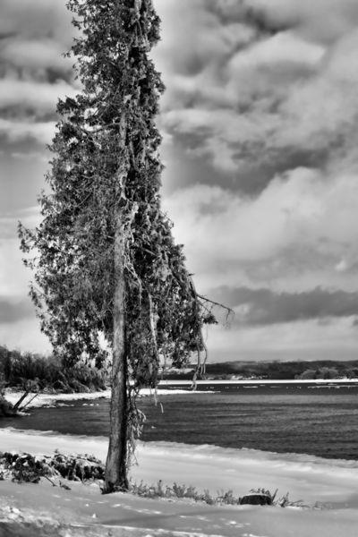 Iced-tree0318