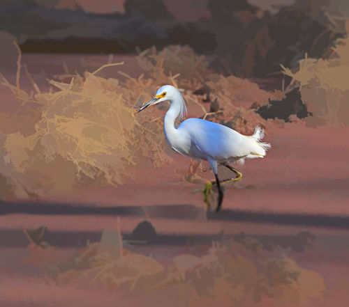 Snowy-egret0325
