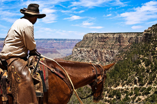 Cowboy-on-the-bright-angel-trail-at-grand-canyon