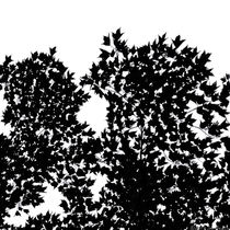 Leaves In Black And White Landscape von Jim Plaxco