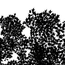 Leaves-in-black-and-white