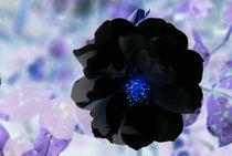 Flower Power von uta-behnfeld