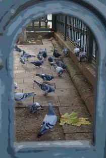Doves in a Frame von uta-behnfeld
