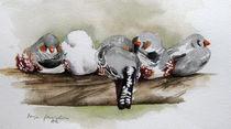 Zebrafinken kuscheln sich ein  von Sonja Jannichsen