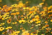 Blumenmeer by meleah