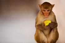Monkey von Michael Truelove