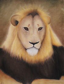 Lion Sketch von Amy Harmse