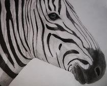 Zebra Sketch by Amy Harmse