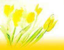 Gelbe Tulpen - Yellow Tulips von Maria-Anna  Ziehr