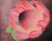Protea Sketch by Amy Harmse