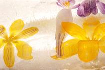 Eisblüten - Ice blossoms 1 by Marc Heiligenstein