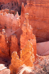 Bryce Canyon Hoodoos by John Bailey