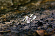 Piece of Ice  by Krzysztof Adamin