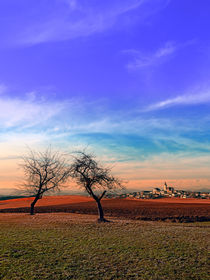 Alte Bäume, Panorama, Sonnenuntergang | Landschaftsfotografie by Patrick Jobst