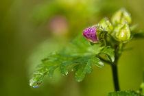 Pink Spot von Janine Brauneis