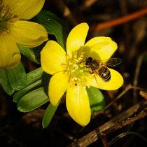 Die erste Biene von Sabine Radtke