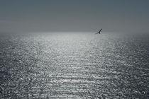 Bis zum Horizont von Janine Brauneis