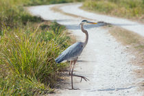 Why Did The Heron Cross The Road by John Bailey